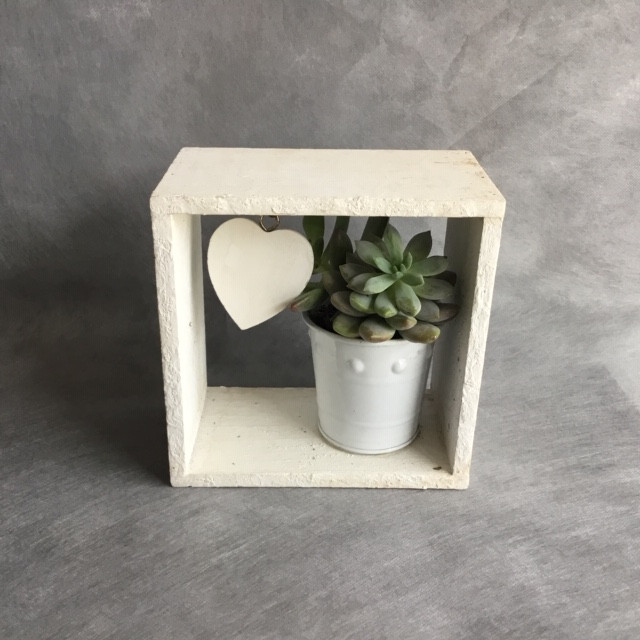 Lovely Succulent Box