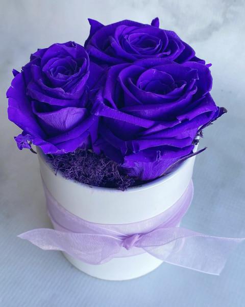 Permanent Rose - Deep Purple
