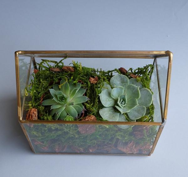 Envelope Terrarium