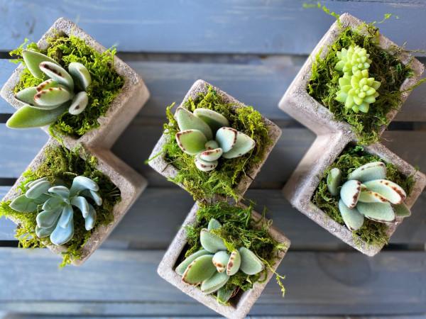 Squared Succulent