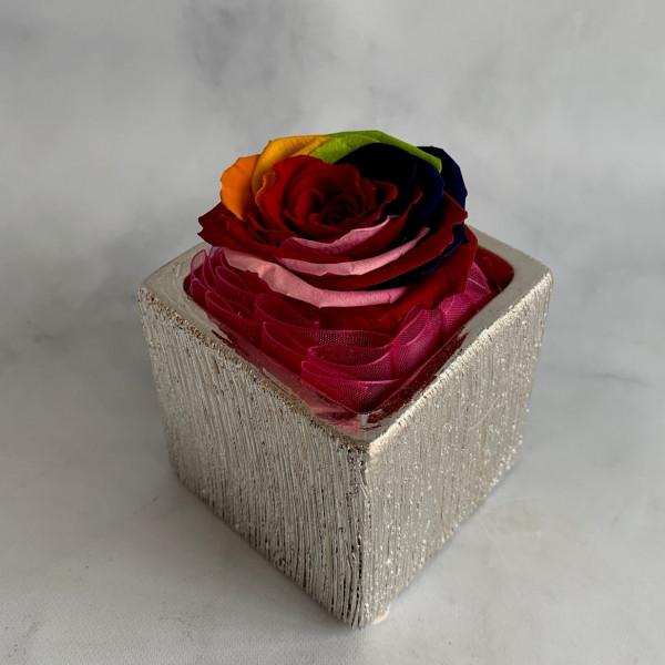 Permanent Rose - Multi
