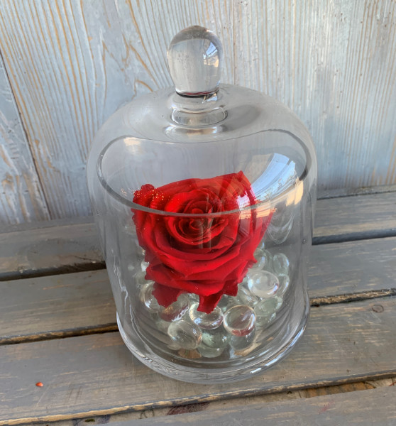 Permanent Rose Single